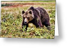 Brown Bear 210 Greeting Card