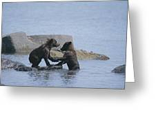 Brown Bear Cubs Playing On A Rocky Greeting Card