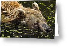 Brown Bear Swimming Greeting Card