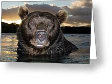 Brown Bear Ursus Arctos In River Greeting Card
