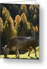 Brown Cow In Valle Lunga Greeting Card