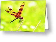 Brown Dragon Greeting Card