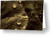 Brown Drops Of Rain Greeting Card