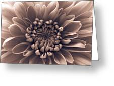 Brown Flower Greeting Card