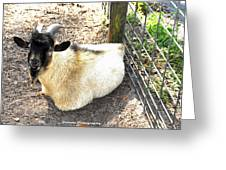 Brown Goat  Greeting Card