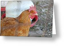 Brown Hen Greeting Card