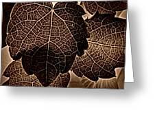 Brown Ivy Greeting Card