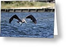 Brown Pelican - Low Flyer Greeting Card
