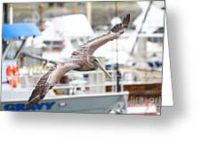 Brown Pelican . 7d8228 Greeting Card by Wingsdomain Art and Photography