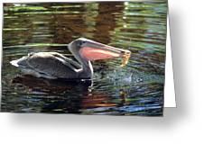 Brown Pelican Afloat Greeting Card