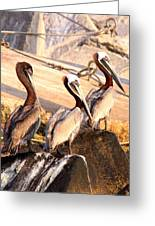 Brown Pelican - Holding Things Together Greeting Card