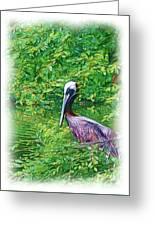 Brown Pelican Greeting Card