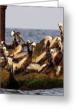 Brown Pelicans - Beauty Of Sand Island Greeting Card
