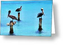 Brown Pelicans In Aruba Greeting Card by Thomas R Fletcher