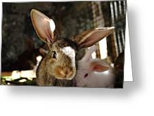 Brown Rabbit Greeting Card