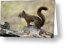 Brown Squirrel In Spokane Greeting Card