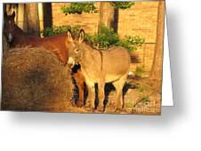 Brown Sugar Eating Some Hay Greeting Card