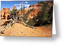 Bryce Canyon Forest Greeting Card