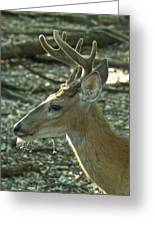 Buck 9246 4037 2 Greeting Card