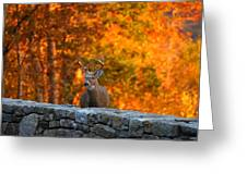 Buck In The Fall 01 Greeting Card
