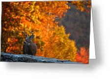 Buck In The Fall 02 Greeting Card