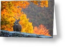 Buck In The Fall 04 Greeting Card