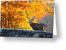 Buck In The Fall 07 Greeting Card