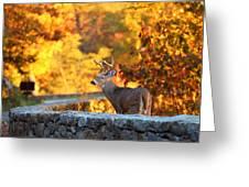 Buck In The Fall 09 Greeting Card