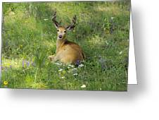 Buck What Are You Looking At Greeting Card