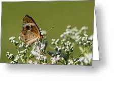 Buckeye Butterfly And Lesser Snakeroot Wildflowers Greeting Card