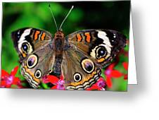Buckeye Buttterfly Greeting Card