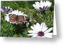 Buckeye's Garden Greeting Card