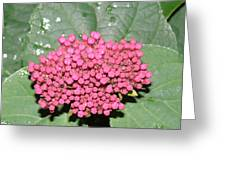 Buds In Pink Greeting Card