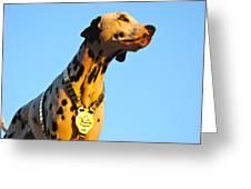 Budweiser Dalmation Greeting Card