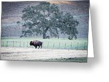 Buffalo And An Oak Tree Greeting Card