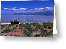 Buffalo And The Great Salt Lake Greeting Card