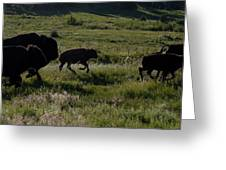 Buffalo Bison Roaming In Custer State Park Sd.-1 Greeting Card
