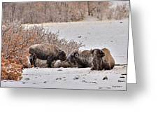 Buffalo Braving The Winter Cold Greeting Card