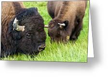 Buffalo Eyes Greeting Card