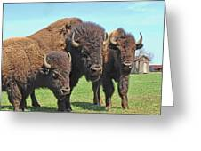 Buffalo Group II Greeting Card