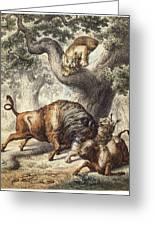 Buffalo & Lynx Greeting Card