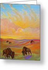 Buffalo Sunrise Greeting Card