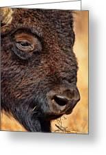 Buffalo Up Close Greeting Card