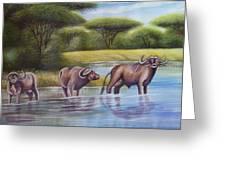Buffalooes Watering Greeting Card