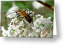 Bug And Flowers Greeting Card
