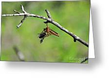 Bug Eat Bug Greeting Card