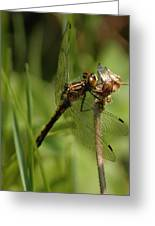 Bug Eyed Dragon Fly Greeting Card