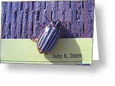 Bug Lands On My Paper Greeting Card