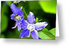 Bug On Blue Greeting Card