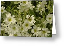 Bug On White Blooms Greeting Card